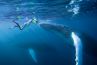 Snorkeling with Whale